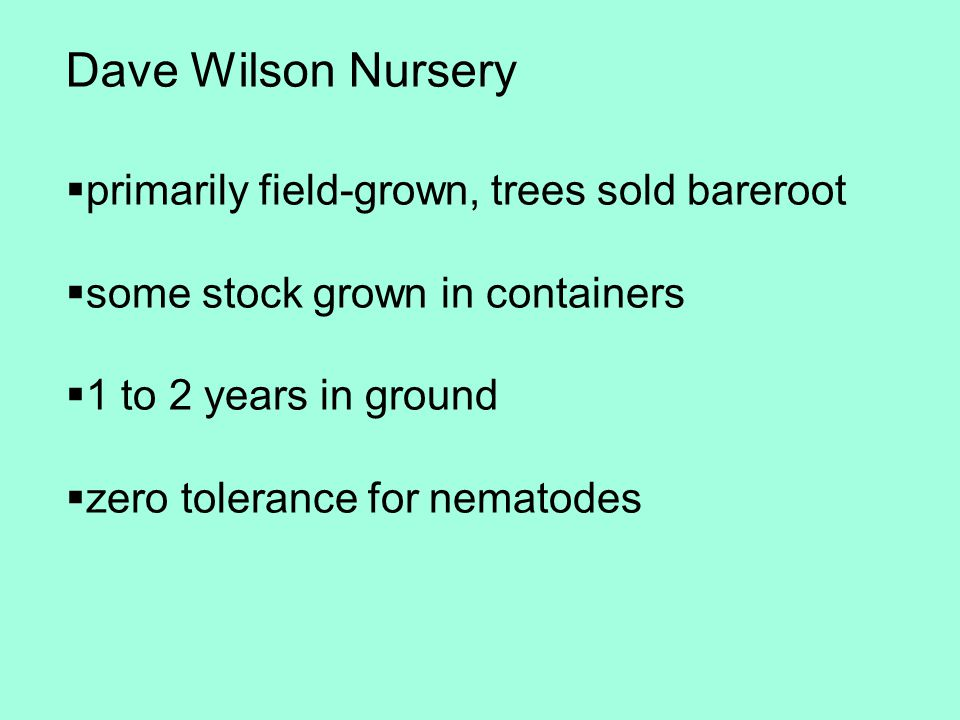  primarily field-grown, trees sold bareroot  some stock grown in containers  1 to 2 years in ground  zero tolerance for nematodes Dave Wilson Nurs