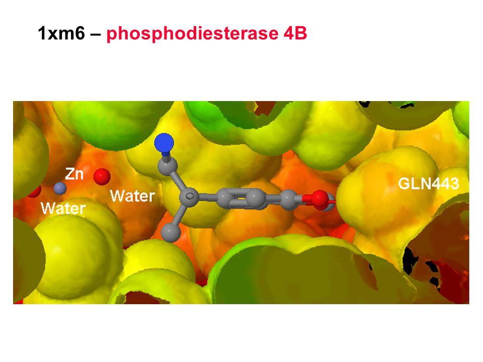 1xm6 – phosphodiesterase 4B