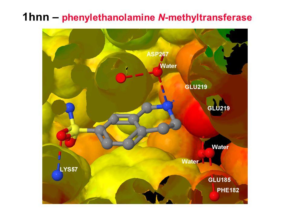 1hnn – phenylethanolamine N-methyltransferase