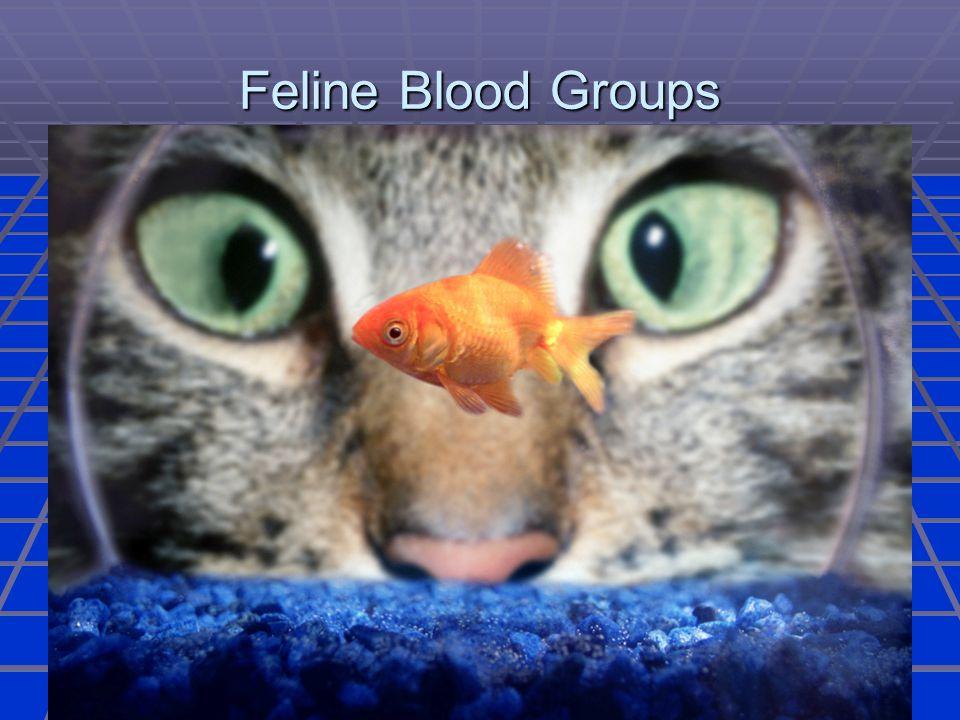 Feline Blood Groups