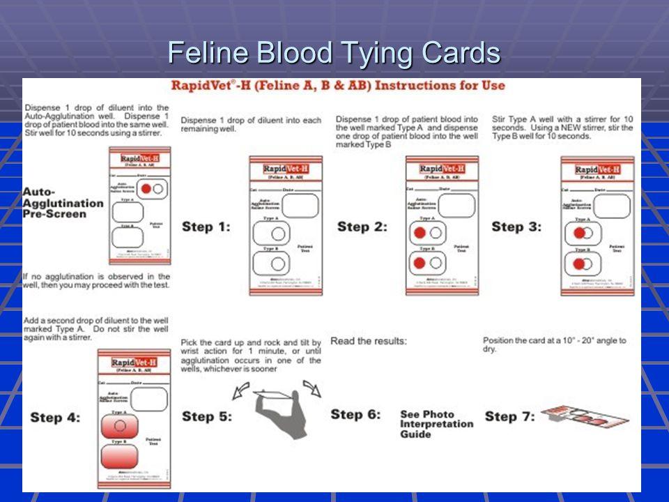 Feline Blood Tying Cards