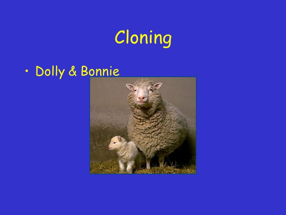 Cloning Dolly & Bonnie