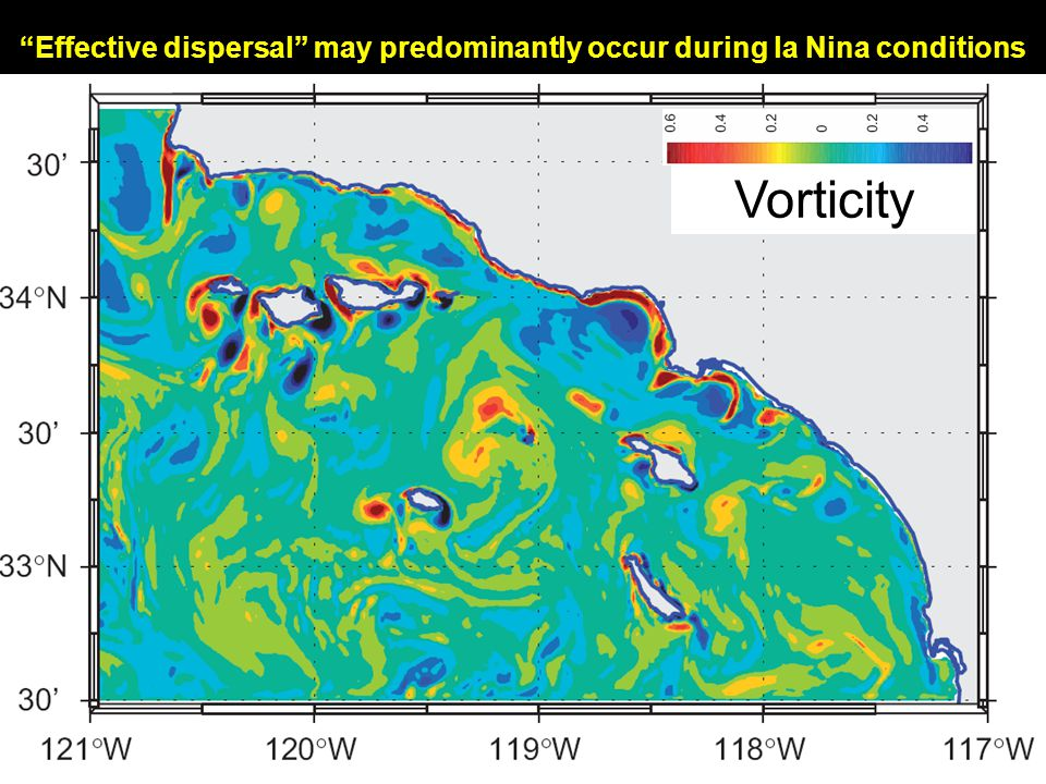 Vorticity Effective dispersal may predominantly occur during la Nina conditions