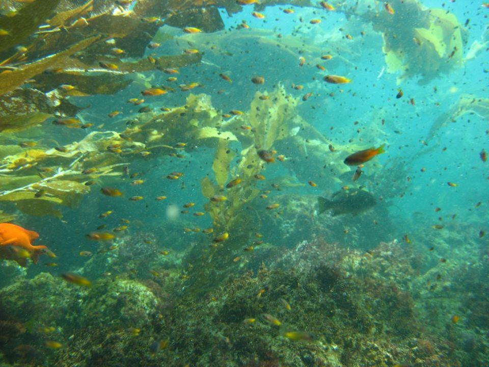 (Halpern 2003, Palumbi 2003) Reserves are good for marine life: