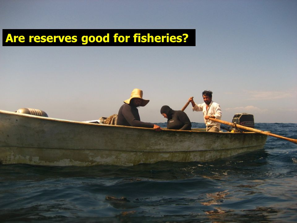 Are reserves good for fisheries