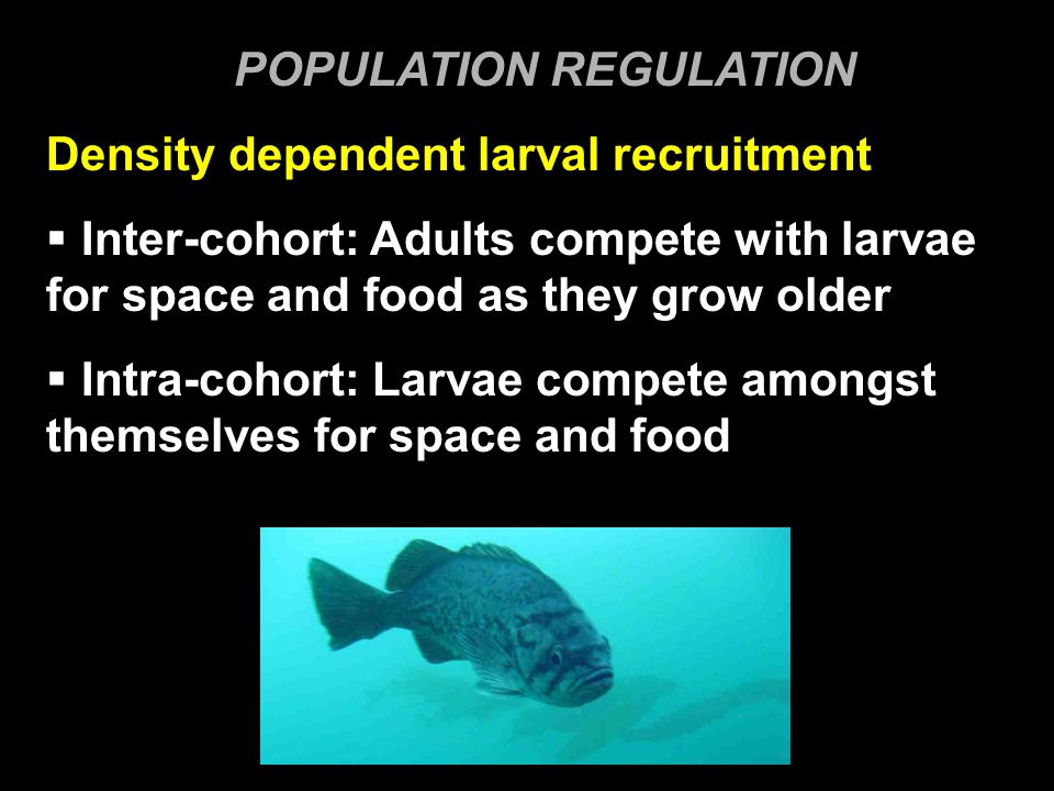 POPULATION REGULATION Density dependent larval recruitment  Inter-cohort: Adults compete with larvae for space and food as they grow older  Intra-cohort: Larvae compete amongst themselves for space and food