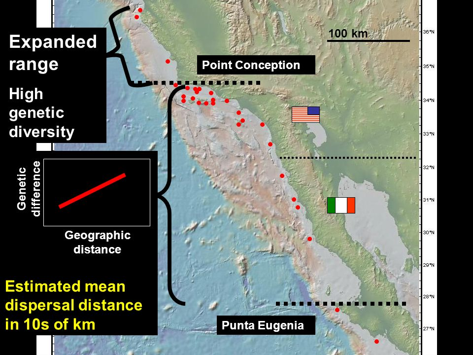 100 km Genetic isolation by geographic distance Estimated mean dispersal distance in 10s of km 100 km Geographic distance Point Conception Punta Eugenia Genetic difference Expanded range High genetic diversity