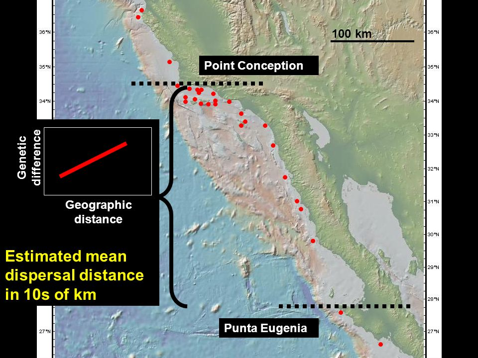 Genetic isolation by geographic distance Estimated mean dispersal distance in 10s of km 100 km Geographic distance Point Conception Punta Eugenia Genetic difference