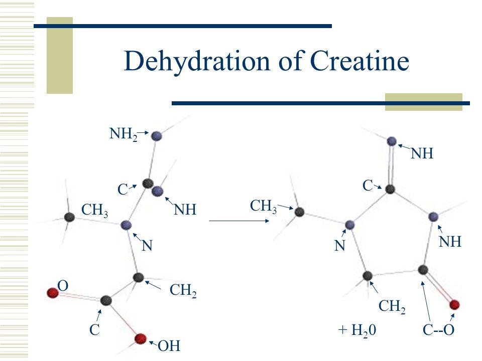 Dehydration of Creatine + H 2 0 O OH CH 2 CH 3 C NH NH 2 NH C N CH 3 CH 2 NH C--O N C