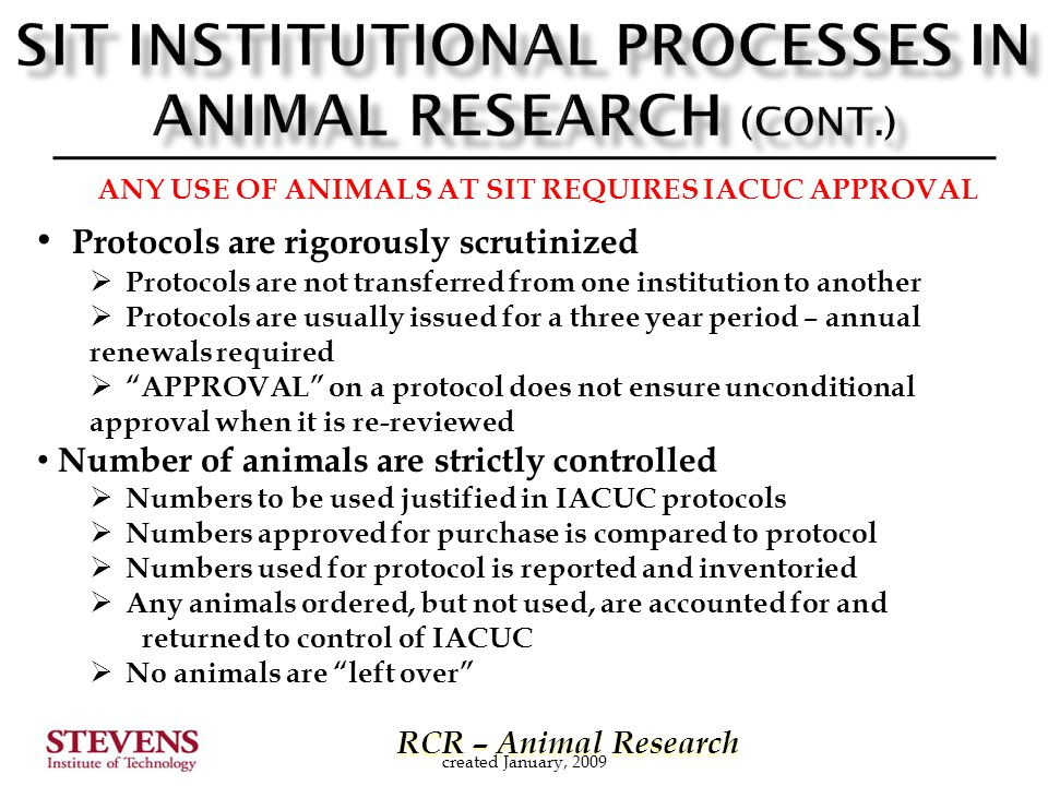 RCR – Animal Research RCR – Animal Research created January, 2009 ANY USE OF ANIMALS AT SIT REQUIRES IACUC APPROVAL Protocols are rigorously scrutinized  Protocols are not transferred from one institution to another  Protocols are usually issued for a three year period – annual renewals required  APPROVAL on a protocol does not ensure unconditional approval when it is re-reviewed Number of animals are strictly controlled  Numbers to be used justified in IACUC protocols  Numbers approved for purchase is compared to protocol  Numbers used for protocol is reported and inventoried  Any animals ordered, but not used, are accounted for and returned to control of IACUC  No animals are left over