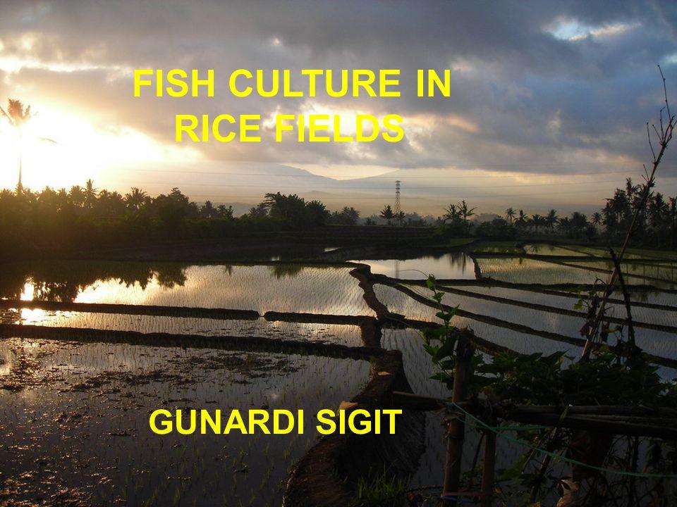 FISH CULTURE IN RICE FIELDS GUNARDI SIGIT