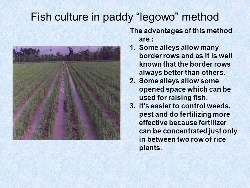 Potential advantages of fish-rice culture : Additional food and income in the form of fish.