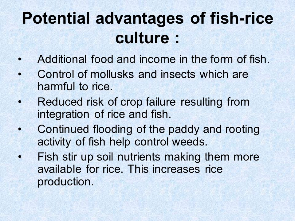 Potential advantages of fish-rice culture : Additional food and income in the form of fish. Control of mollusks and insects which are harmful to rice.