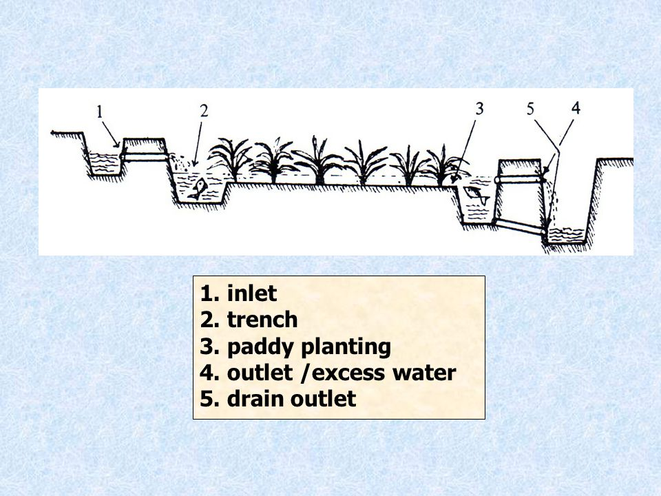 1. inlet 2. trench 3. paddy planting 4. outlet /excess water 5. drain outlet