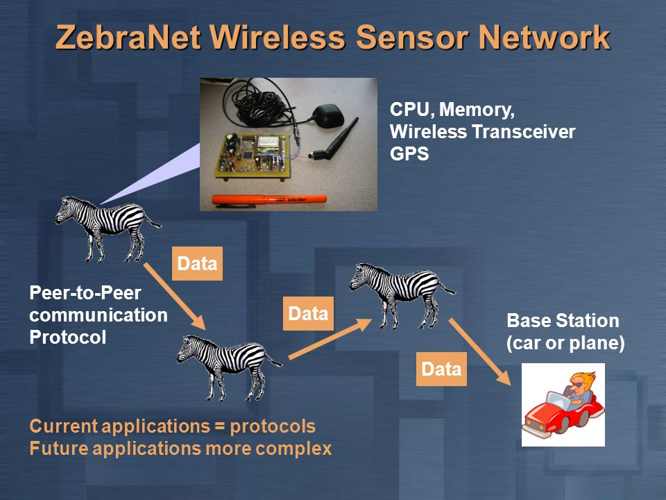 ZebraNet Wireless Sensor Network Data Base Station (car or plane) Data Peer-to-Peer communication Protocol CPU, Memory, Wireless Transceiver GPS Curre