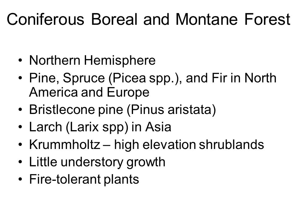 Coniferous Boreal and Montane Forest Northern Hemisphere Pine, Spruce (Picea spp.), and Fir in North America and Europe Bristlecone pine (Pinus aristata) Larch (Larix spp) in Asia Krummholtz – high elevation shrublands Little understory growth Fire-tolerant plants
