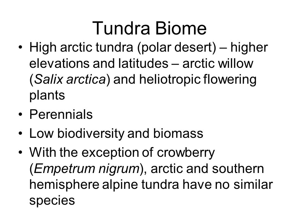 Tundra Biome High arctic tundra (polar desert) – higher elevations and latitudes – arctic willow (Salix arctica) and heliotropic flowering plants Perennials Low biodiversity and biomass With the exception of crowberry (Empetrum nigrum), arctic and southern hemisphere alpine tundra have no similar species