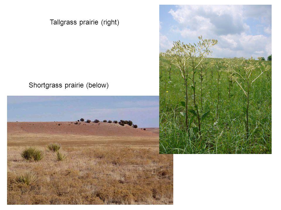 Shortgrass prairie (below) Tallgrass prairie (right)