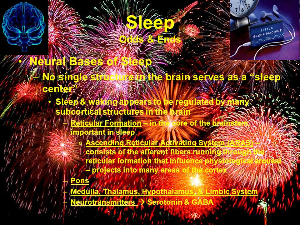 Sleep Odds & Ends Neural Bases of Sleep –No single structure in the brain serves as a sleep center Sleep & waking appears to be regulated by many subcortical structures in the brain –Reticular Formation – in the core of the brainstem, important in sleep »Ascending Reticular Activating System (ARAS) – consists of the afferent fibers running through the reticular formation that influence physiological arousal – projects into many areas of the cortex –Pons –Medulla, Thalamus, Hypothalamus, & Limbic System –Neurotransmitters  Serotonin & GABA