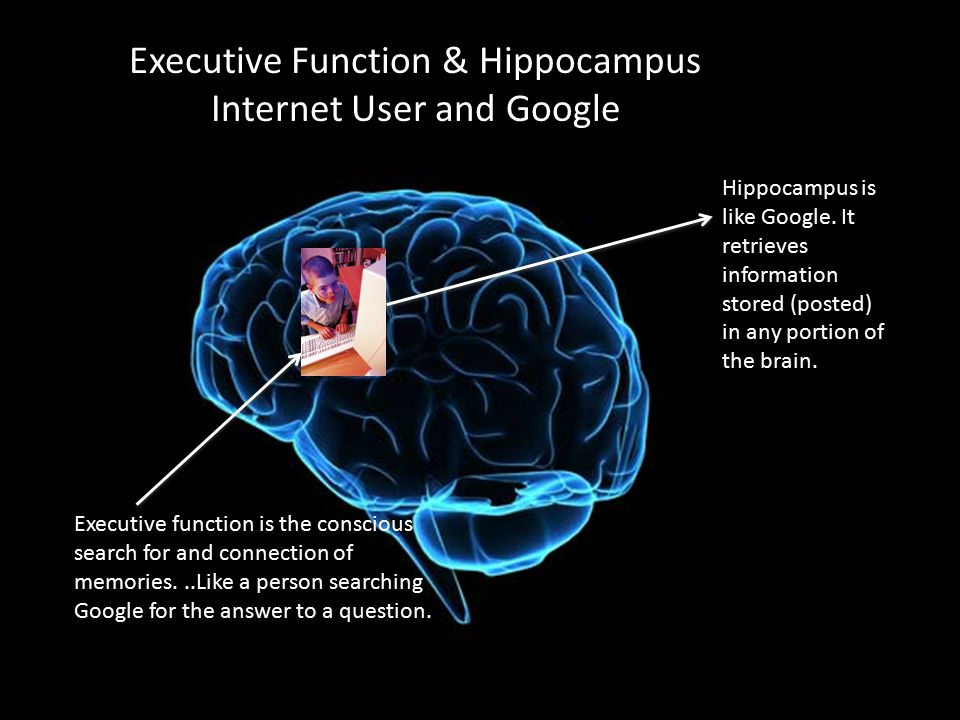 Executive Function & Hippocampus Internet User and Google Executive function is the conscious search for and connection of memories...Like a person se
