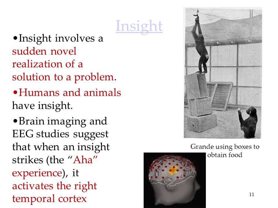 11 Insight Insight involves a sudden novel realization of a solution to a problem. Humans and animals have insight. Brain imaging and EEG studies sugg