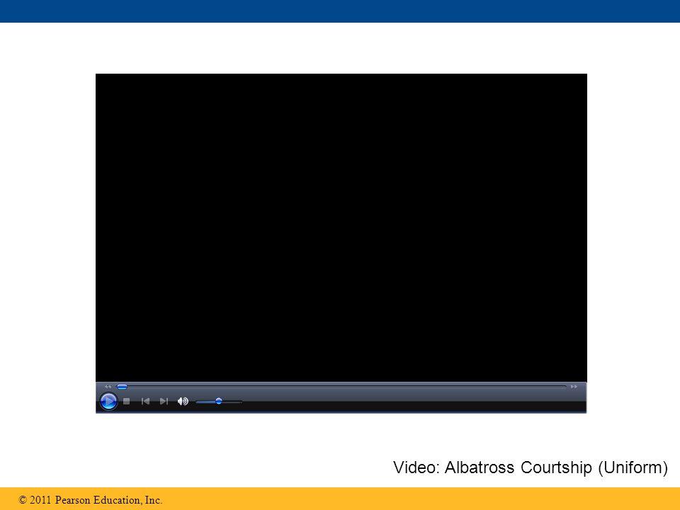 © 2011 Pearson Education, Inc. Video: Albatross Courtship (Uniform)