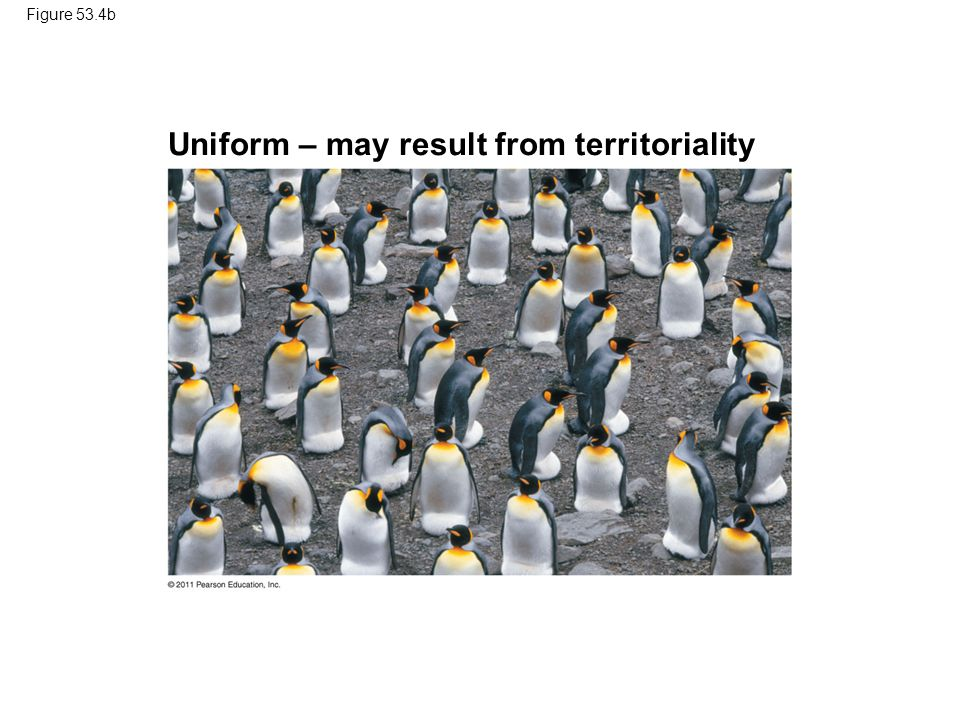 Figure 53.4b Uniform – may result from territoriality