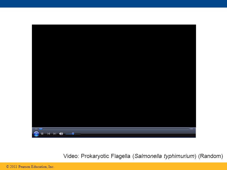 © 2011 Pearson Education, Inc. Video: Prokaryotic Flagella (Salmonella typhimurium) (Random)