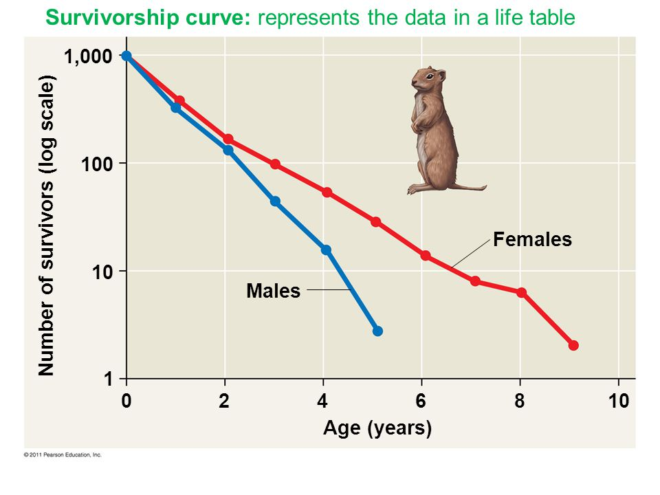 Males Females 1,000 100 10 1 Age (years) Number of survivors (log scale) 0246810 Survivorship curve: represents the data in a life table