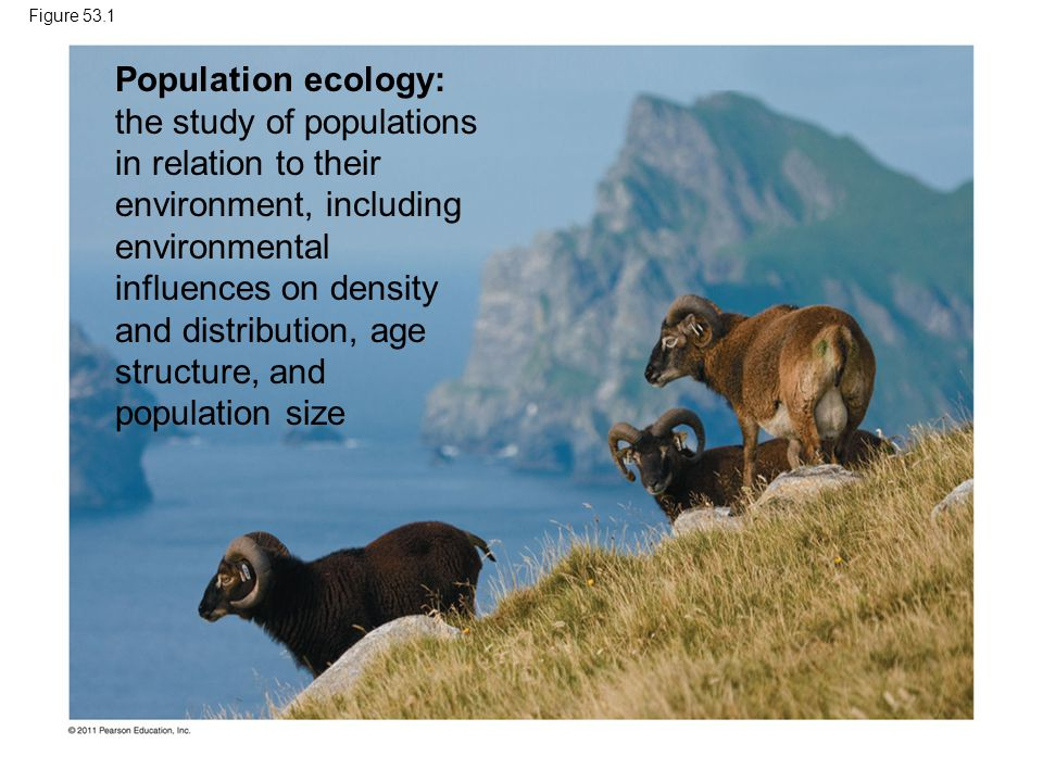 Figure 53.1 Population ecology: the study of populations in relation to their environment, including environmental influences on density and distribut