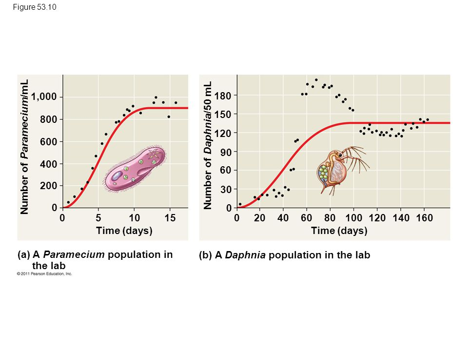 Figure 53.10 Time (days) (a) A Paramecium population in the lab (b) A Daphnia population in the lab Number of Paramecium/mL Number of Daphnia/50 mL 1,