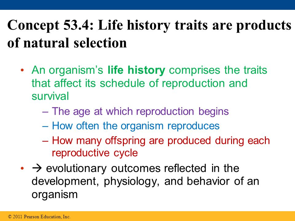 Concept 53.4: Life history traits are products of natural selection An organism's life history comprises the traits that affect its schedule of reproduction and survival –The age at which reproduction begins –How often the organism reproduces –How many offspring are produced during each reproductive cycle  evolutionary outcomes reflected in the development, physiology, and behavior of an organism © 2011 Pearson Education, Inc.