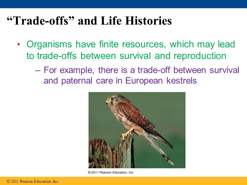 Trade-offs and Life Histories Organisms have finite resources, which may lead to trade-offs between survival and reproduction –For example, there is a trade-off between survival and paternal care in European kestrels © 2011 Pearson Education, Inc.