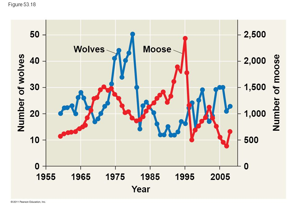 WolvesMoose Year Number of wolves Number of moose 195519651975198519952005 50 40 30 20 10 0 2,500 2,000 1,500 1,000 500 0 Figure 53.18