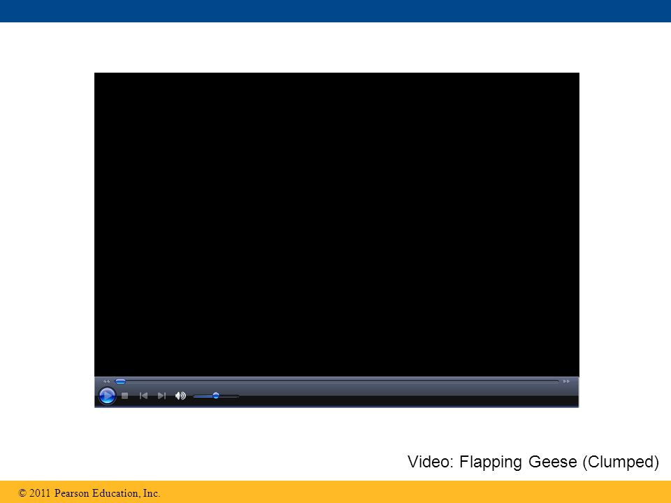 © 2011 Pearson Education, Inc. Video: Flapping Geese (Clumped)