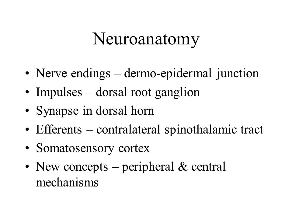 Neuroanatomy Nerve endings – dermo-epidermal junction Impulses – dorsal root ganglion Synapse in dorsal horn Efferents – contralateral spinothalamic tract Somatosensory cortex New concepts – peripheral & central mechanisms