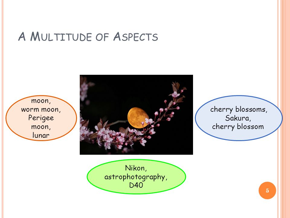 A M ULTITUDE OF A SPECTS moon, worm moon, Perigee moon, lunar cherry blossoms, Sakura, cherry blossom Nikon, astrophotography, D40 5