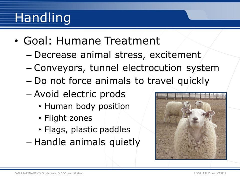 Goal: Humane Treatment – Decrease animal stress, excitement – Conveyors, tunnel electrocution system – Do not force animals to travel quickly – Avoid