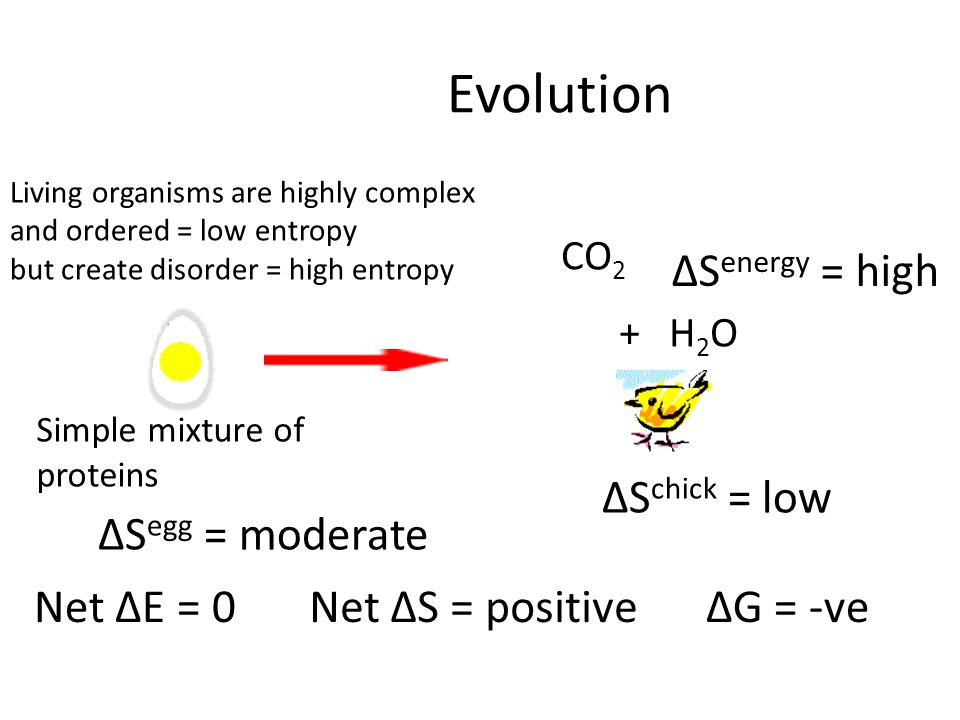 Evolution CO 2 + H2OH2O Simple mixture of proteins ΔS egg = moderate ΔS chick = low ΔS energy = high Net ΔE = 0Net ΔS = positiveΔG = -ve Living organisms are highly complex and ordered = low entropy but create disorder = high entropy
