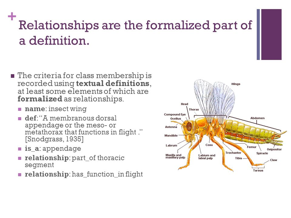 + Relationships are the formalized part of a definition.