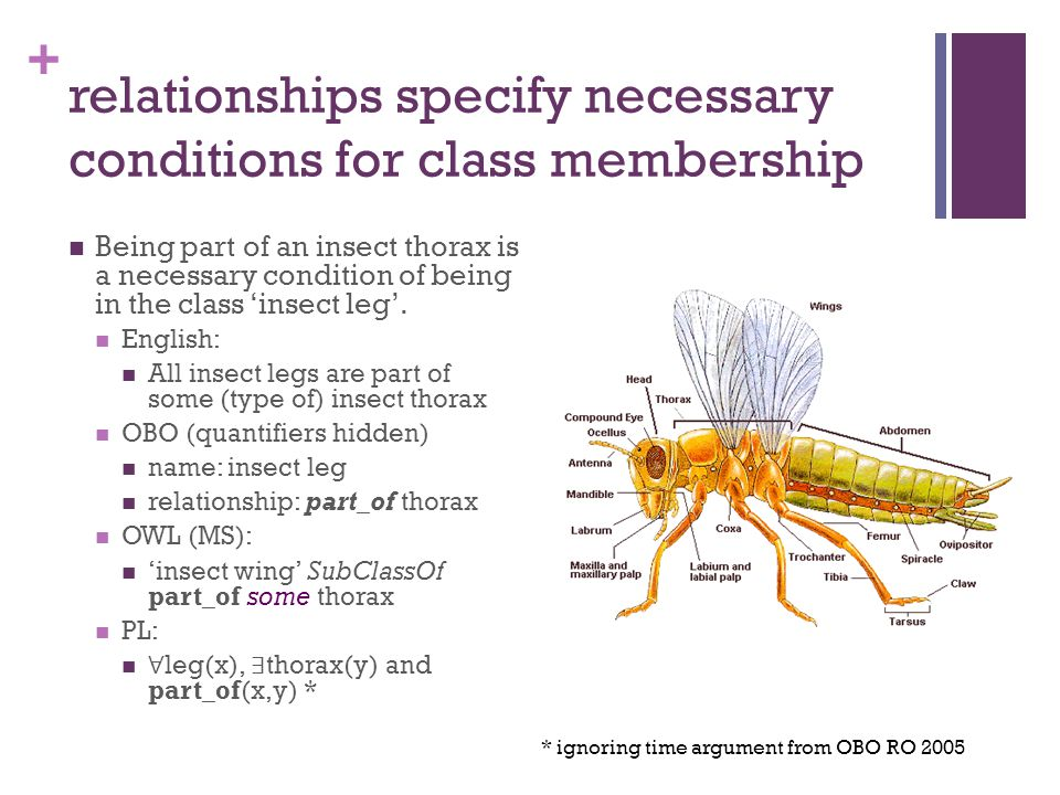 + relationships specify necessary conditions for class membership Being part of an insect thorax is a necessary condition of being in the class 'insect leg'.