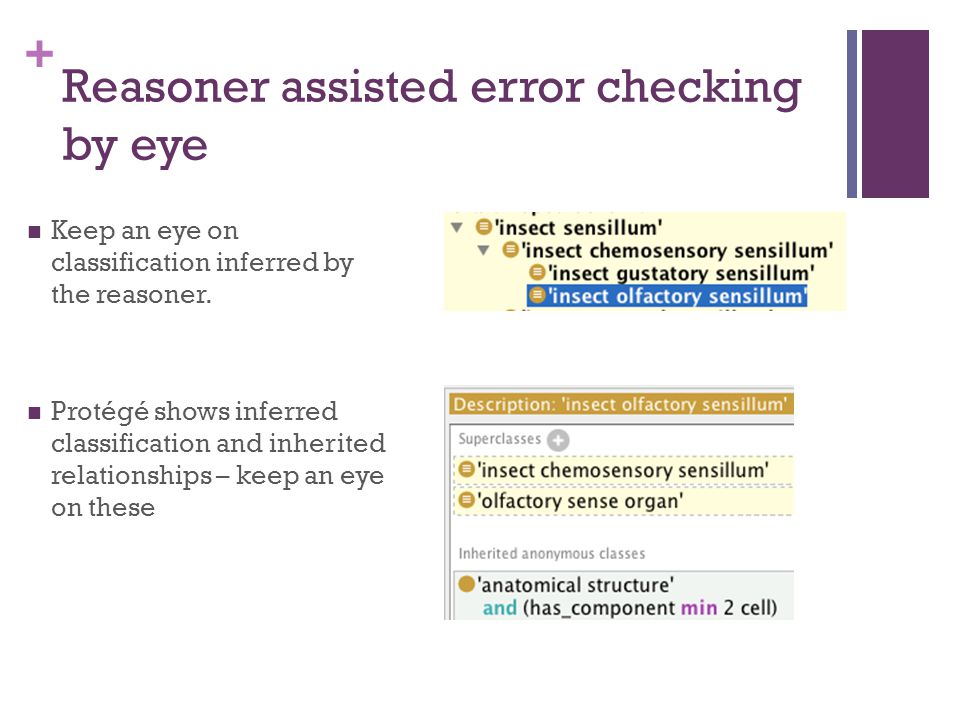 + Reasoner assisted error checking by eye Keep an eye on classification inferred by the reasoner.
