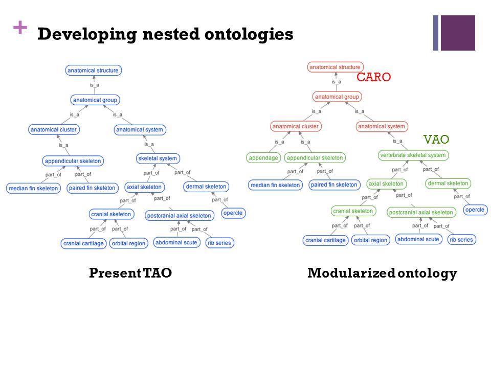 + Developing nested ontologies CARO VAO Present TAOModularized ontology