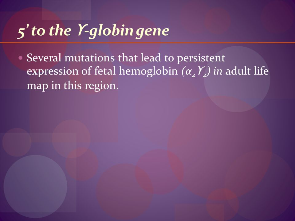 5' to the ϒ -globin gene Several mutations that lead to persistent expression of fetal hemoglobin (α 2 ϒ 2 ) in adult life map in this region.