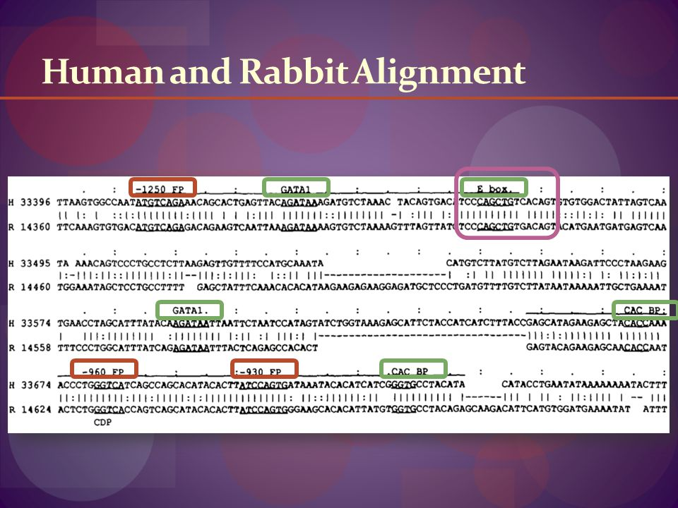 Human and Rabbit Alignment
