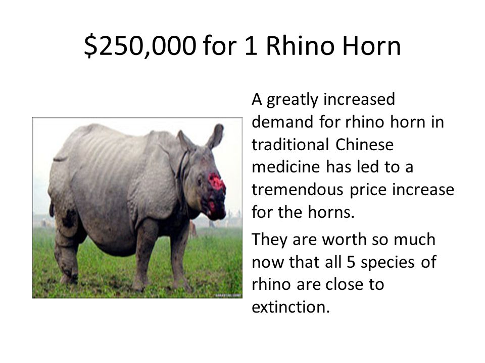 $250,000 for 1 Rhino Horn A greatly increased demand for rhino horn in traditional Chinese medicine has led to a tremendous price increase for the hor