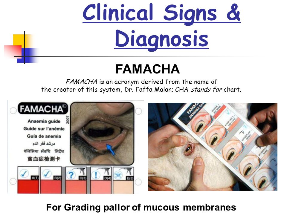 Clinical Signs & Diagnosis FAMACHA is an acronym derived from the name of the creator of this system, Dr. Faffa Malan; CHA stands for chart. FAMACHA F