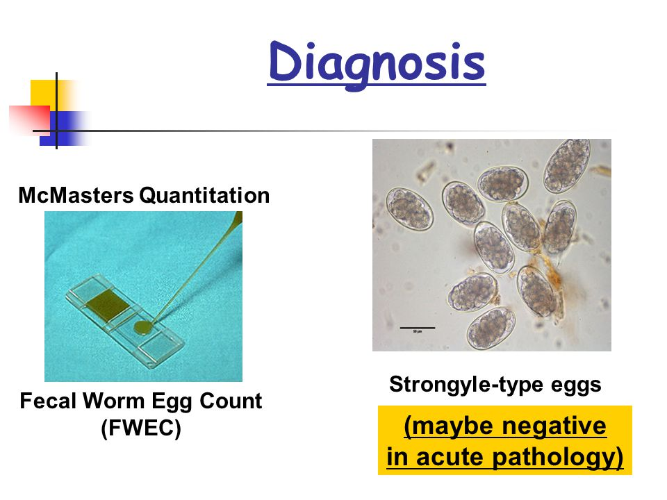 Diagnosis McMasters Quantitation Fecal Worm Egg Count (FWEC) Strongyle-type eggs (maybe negative in acute pathology)