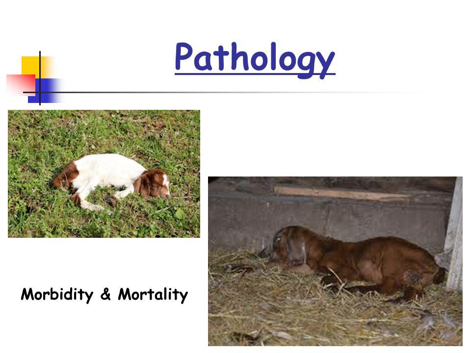 Pathology Morbidity & Mortality