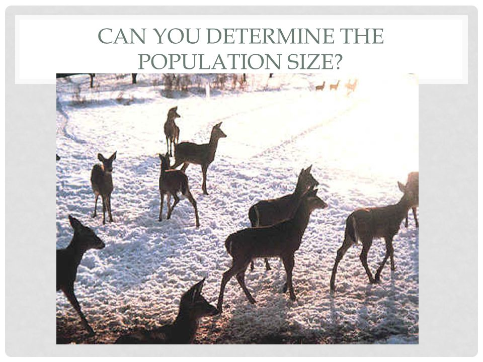 CAN YOU DETERMINE THE POPULATION SIZE?